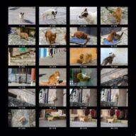 animals_s_02