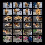animals_s_08