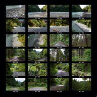 woods_s_05